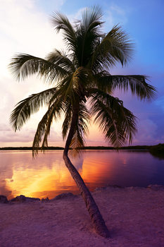 Umělecká fotografie  Palm Tree at Sunset - Florida