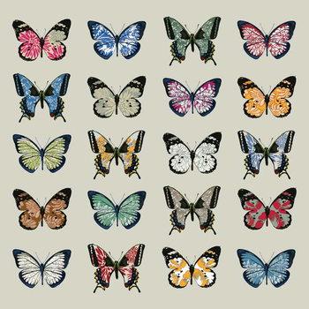 Obrazová reprodukce Papillon, 2008