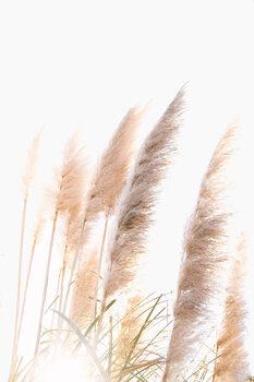 Artă fotografică Reed 1