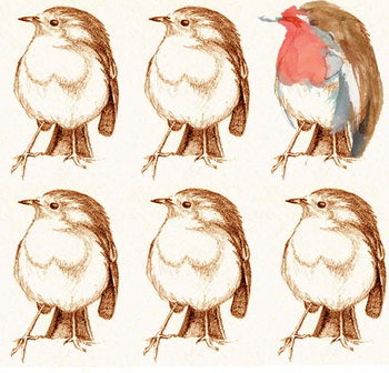 Obrazová reprodukce Robin