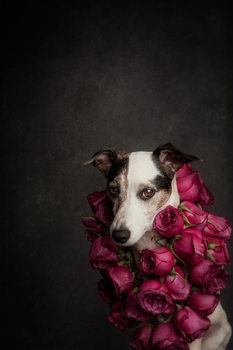 Kunstfotografi Rose Queen II