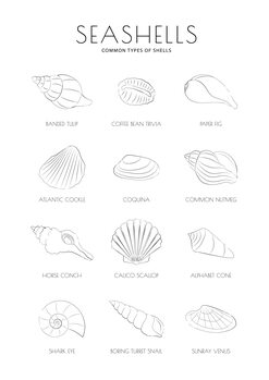 Ilustrace Seashells