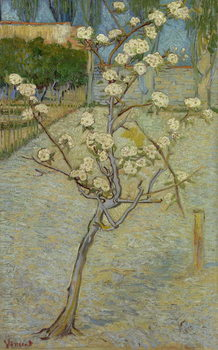 Small pear tree in blossom, 1888 Reproduction d'art