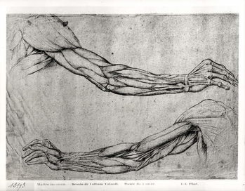 Study of Arms Reproduction de Tableau