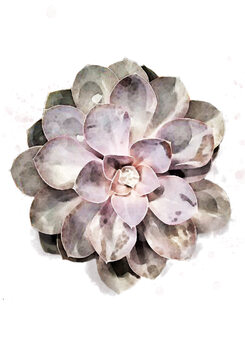 Illustration Succulent 01