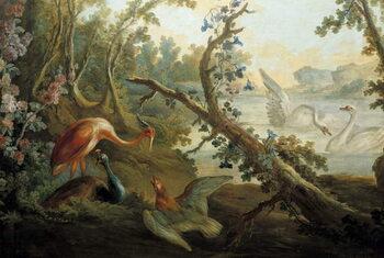 Reprodukcja Swans and peacocks
