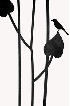 Ilustracija The Bird NOIR