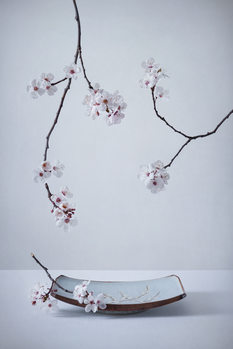 Kunst fotografie The First Cherry Blossom