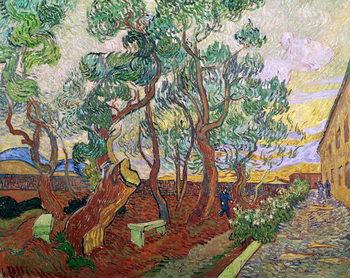 Reproducción de arte The Garden of St. Paul's Hospital at St. Remy