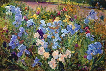 The Iris Bed, 1993 Reproduction de Tableau