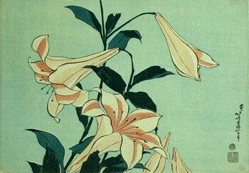 Obrazová reprodukce Trumpet Lilies
