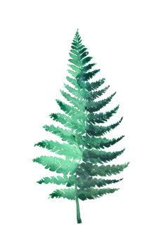 Illustration Watercolor fern illustration