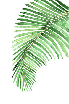 Ilustrace Watercolor palm leaf