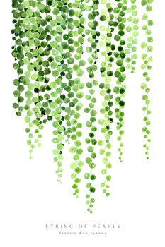 Ilustrace Watercolor string of pearls illustration