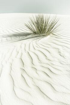 Художествена фотография WHITE SANDS Vintage scenery