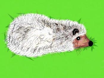 Obrazová reprodukce Wicked Spiky Hedgehog, 2019,