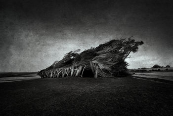 Kunstfotografie Wind Blown