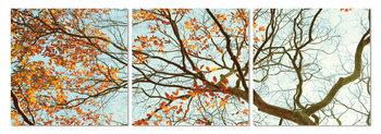 Autumn treetop Moderne billede