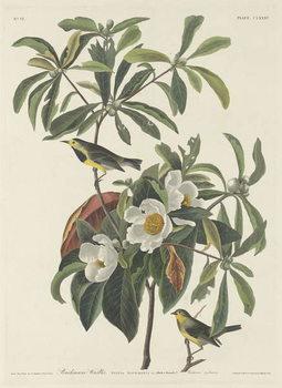 Bachman's Warbler, 1834 Festmény reprodukció