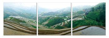 Plantations on the hills Moderne bilde