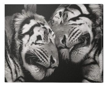 Canvastavla Marina Cano - Sleeping Tigers