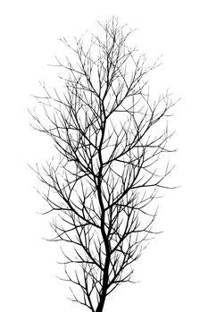 Canvastavla The Tree BLACK