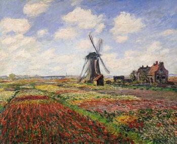 Canvastavla Tulip Fields with the Rijnsburg Windmill, 1886