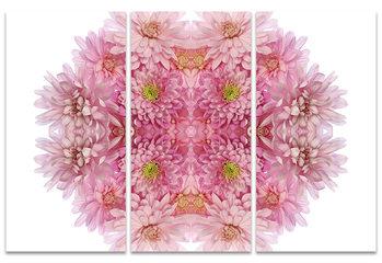 Canvastavla Alyson Fennell - Pink Chrysanthemum Explosion