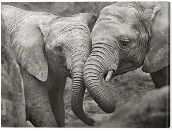 Canvastavla Marina Cano - Elephants in Love