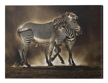 Canvastavla Marina Cano - Zebra Grevys