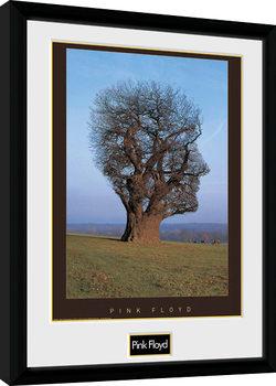 Pink Floyd - Tree indrammet plakat