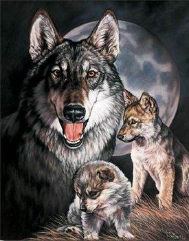 Metallschild GRAHAM - Wolf Experience