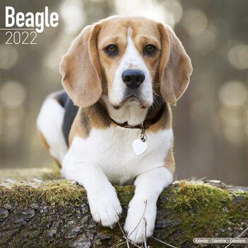 Beagle Calendar 2022