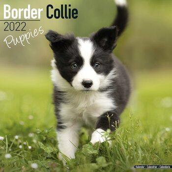 Border Collie - Pups Calendar 2022