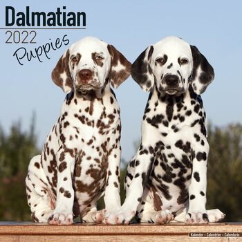 Dalmatian - Pups Calendar 2022