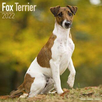 Fox Terrier Calendar 2022