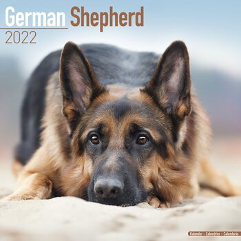 German Shepherd Calendar 2022