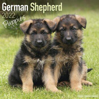 German Shepherd - Pups Calendar 2022
