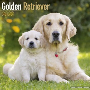 Golden Retriever Calendar 2022