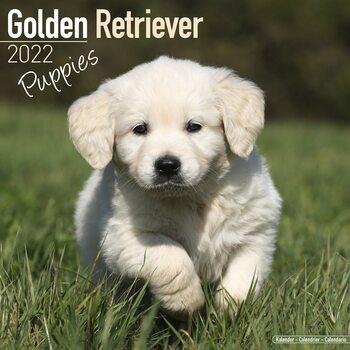 Golden Retriever - Pups Calendar 2022
