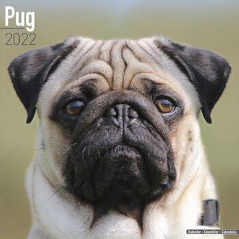 Pug Calendar 2022