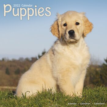 Pups Calendar 2022