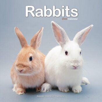 Rabbits Calendar 2022