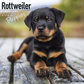Rottweiler - Pups Calendar 2022