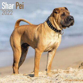 Shar Pei Calendar 2022
