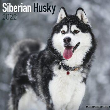Siberian Husky Calendar 2022