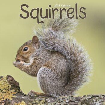 Squirrels Calendar 2022
