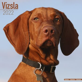 Vizsla Calendar 2022