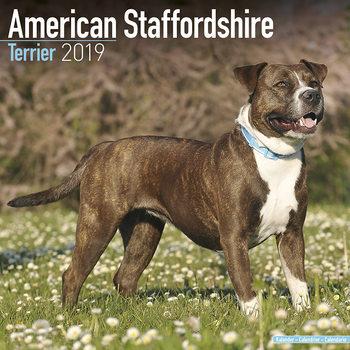 American Staffordshire Terrier Calendar 2019