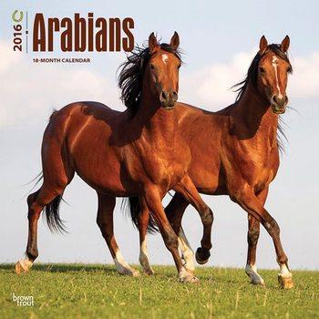 Arabians Horses Calendar 2021